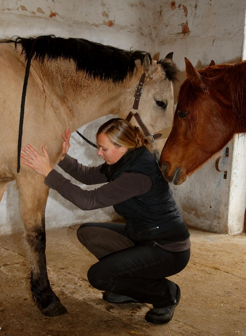 Energiebehandlung Pferd