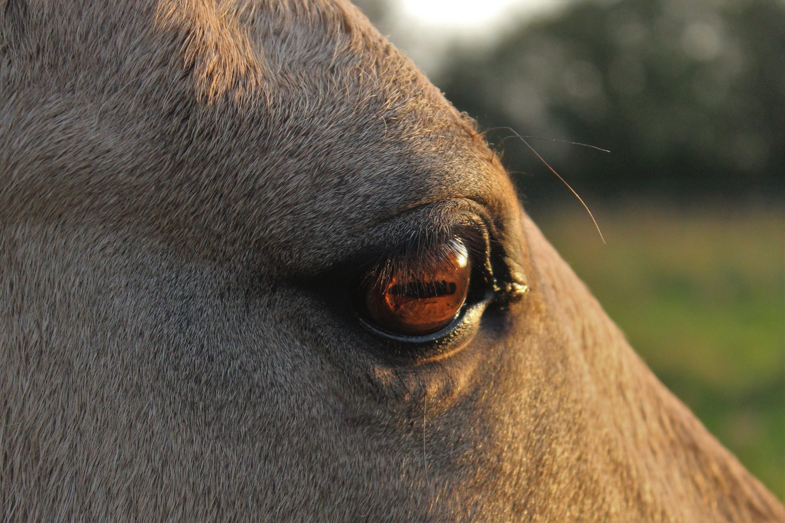 Stute Pferdegespräch