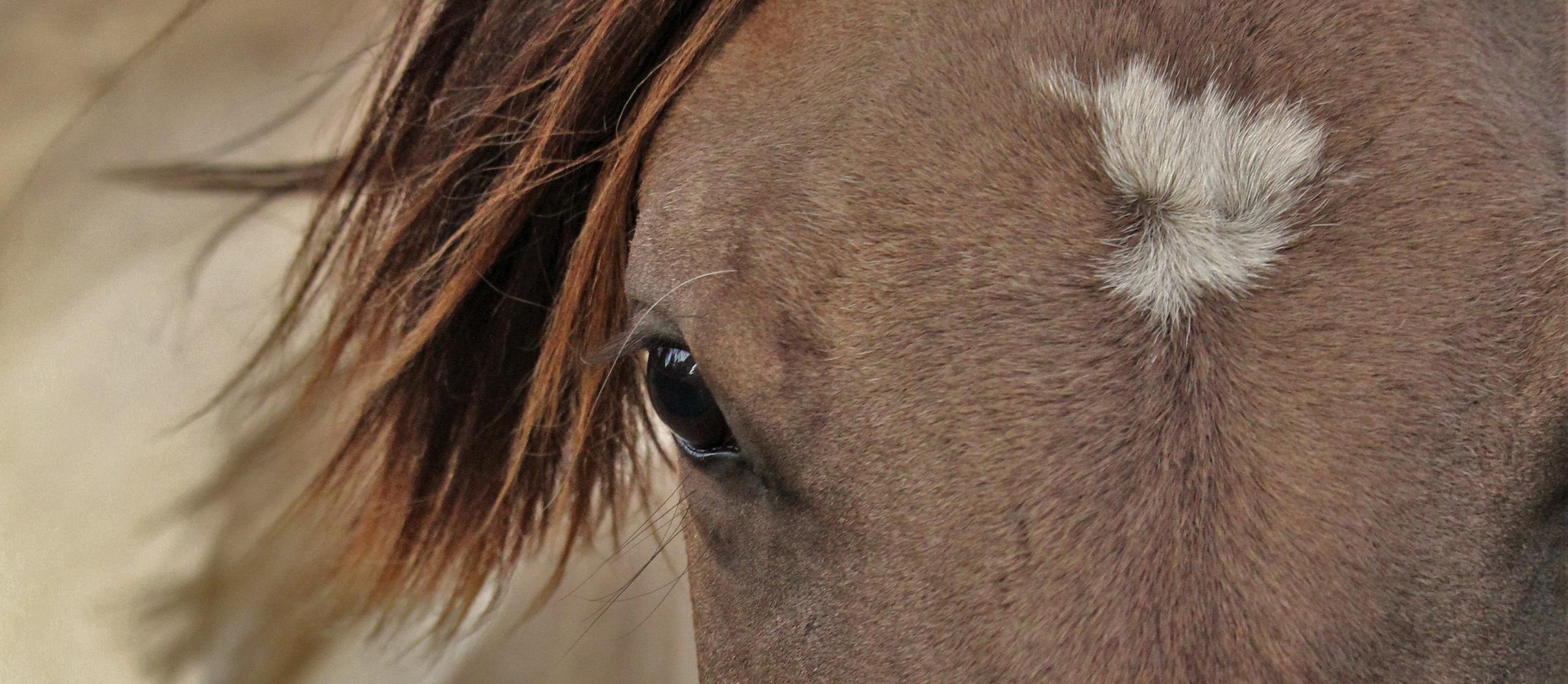 Pferdeflüsterer Tierkommunikation