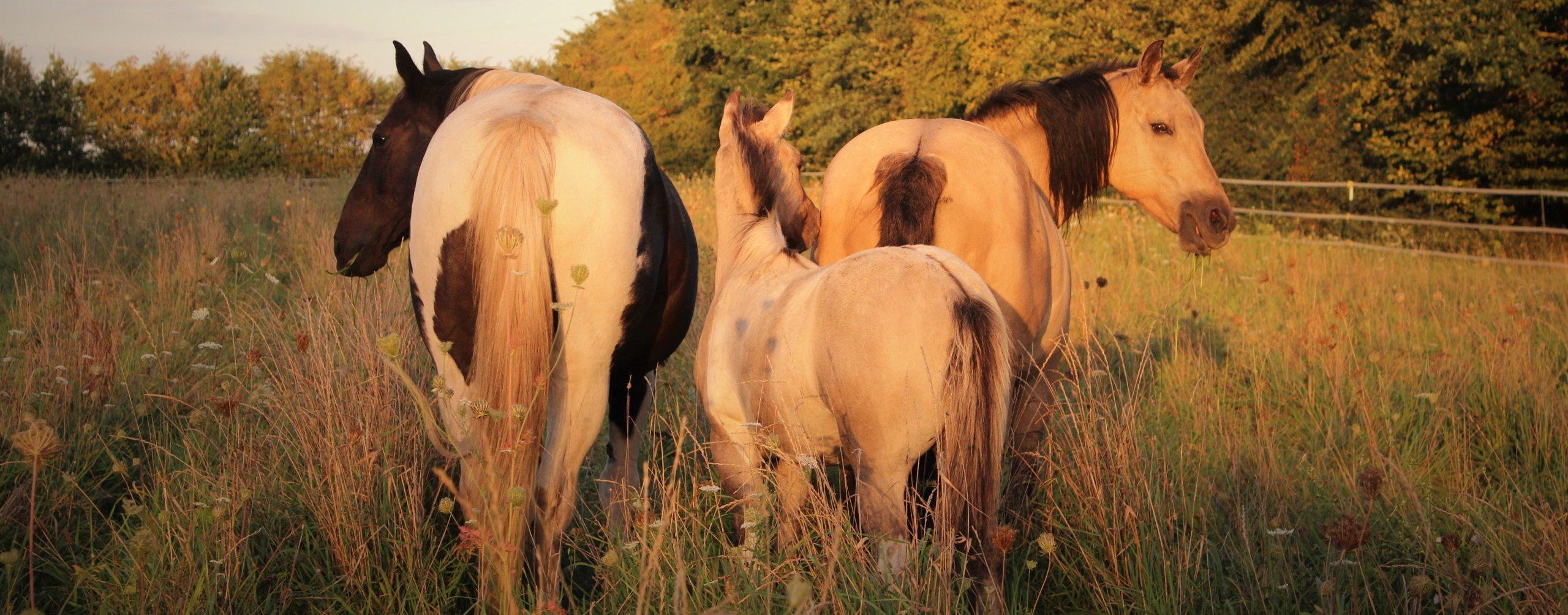 Erfahrungsberichte Tierkommunikation Pferd