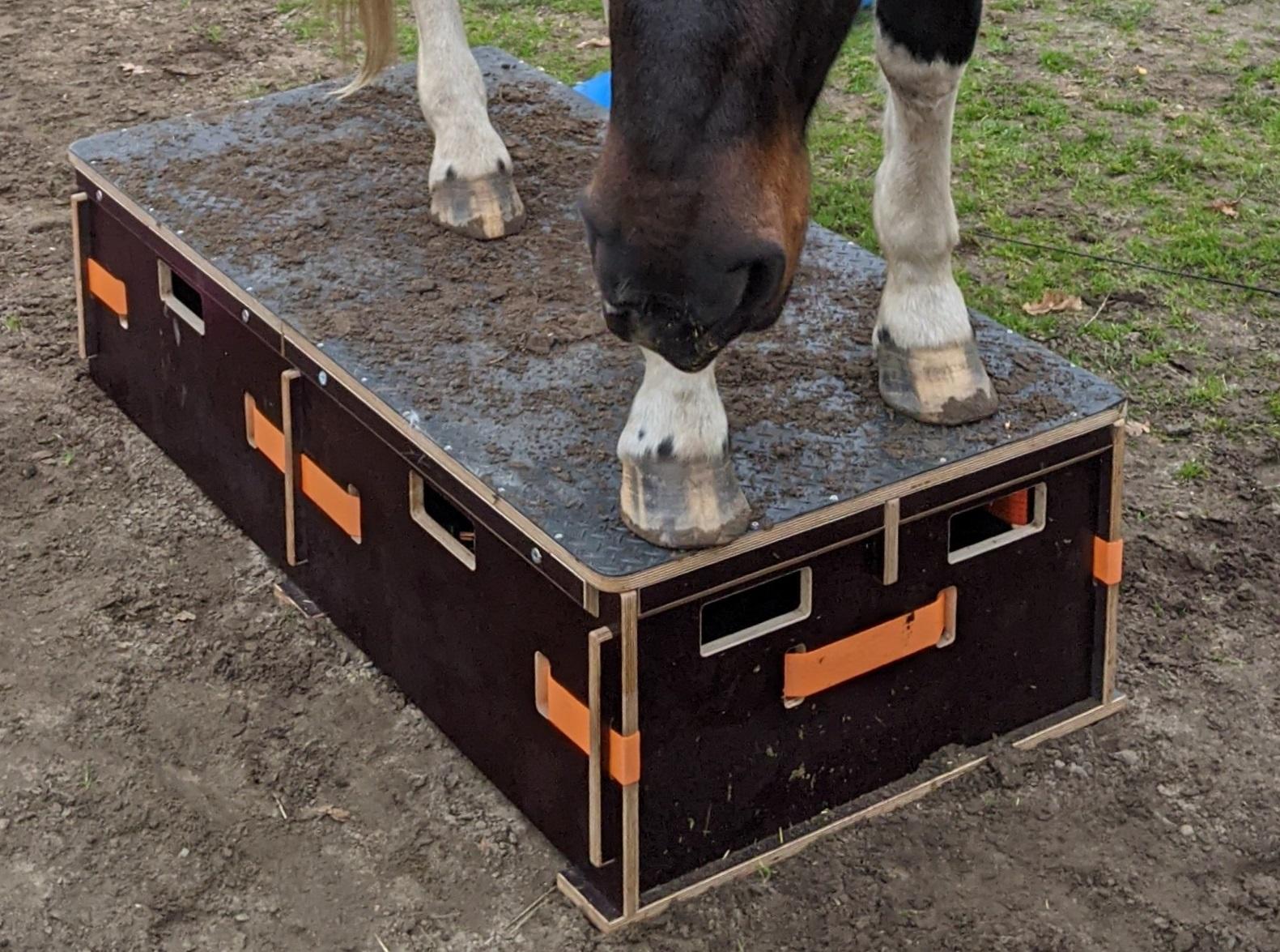 Podest Pferd
