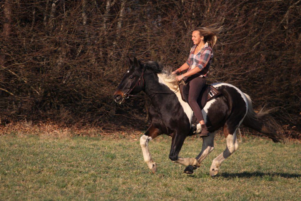 wie pferde reiten möchten