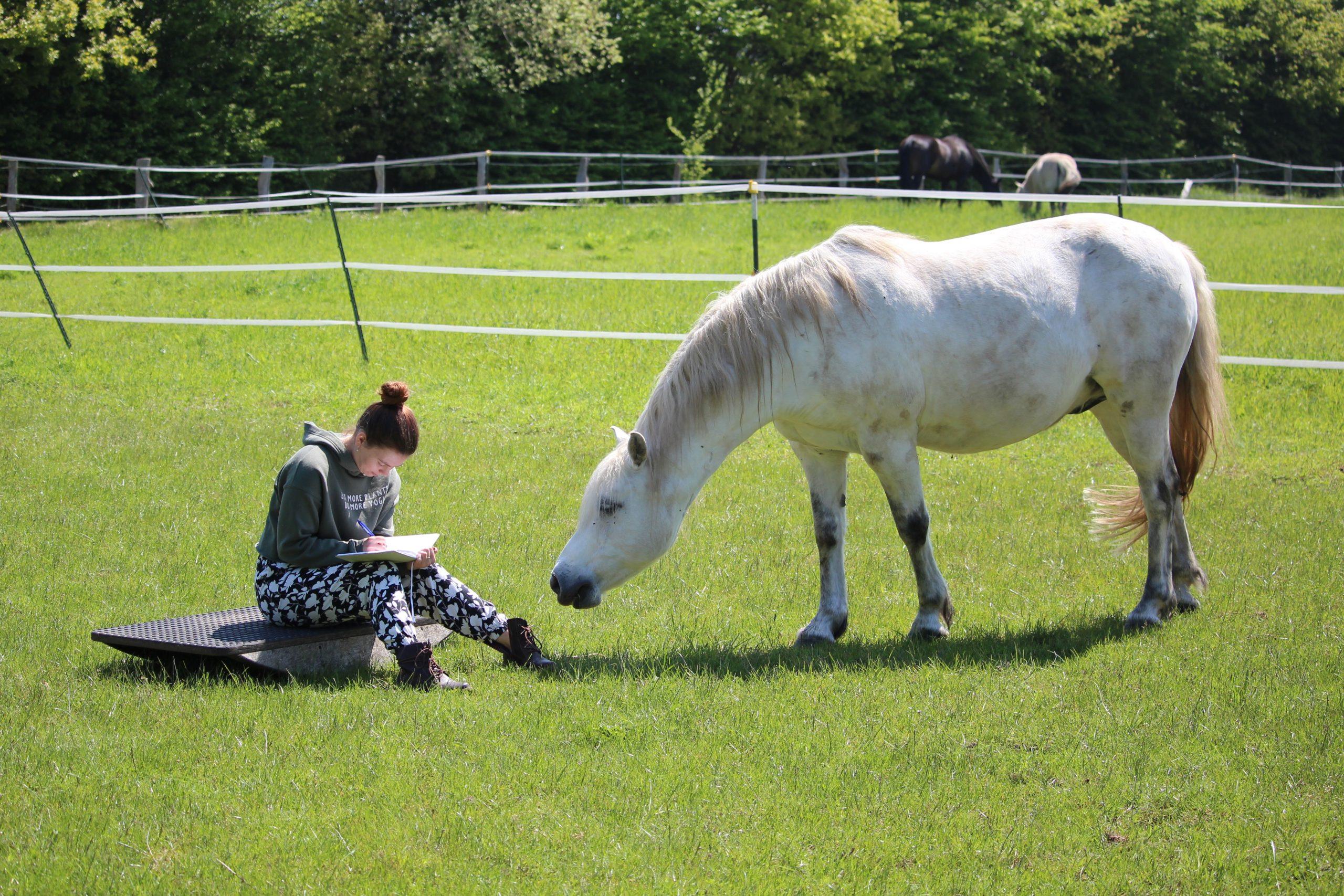 Weißes Pony steht auf der Wiese und seine Besitzerin sitzt vor ihm auf dem Boden