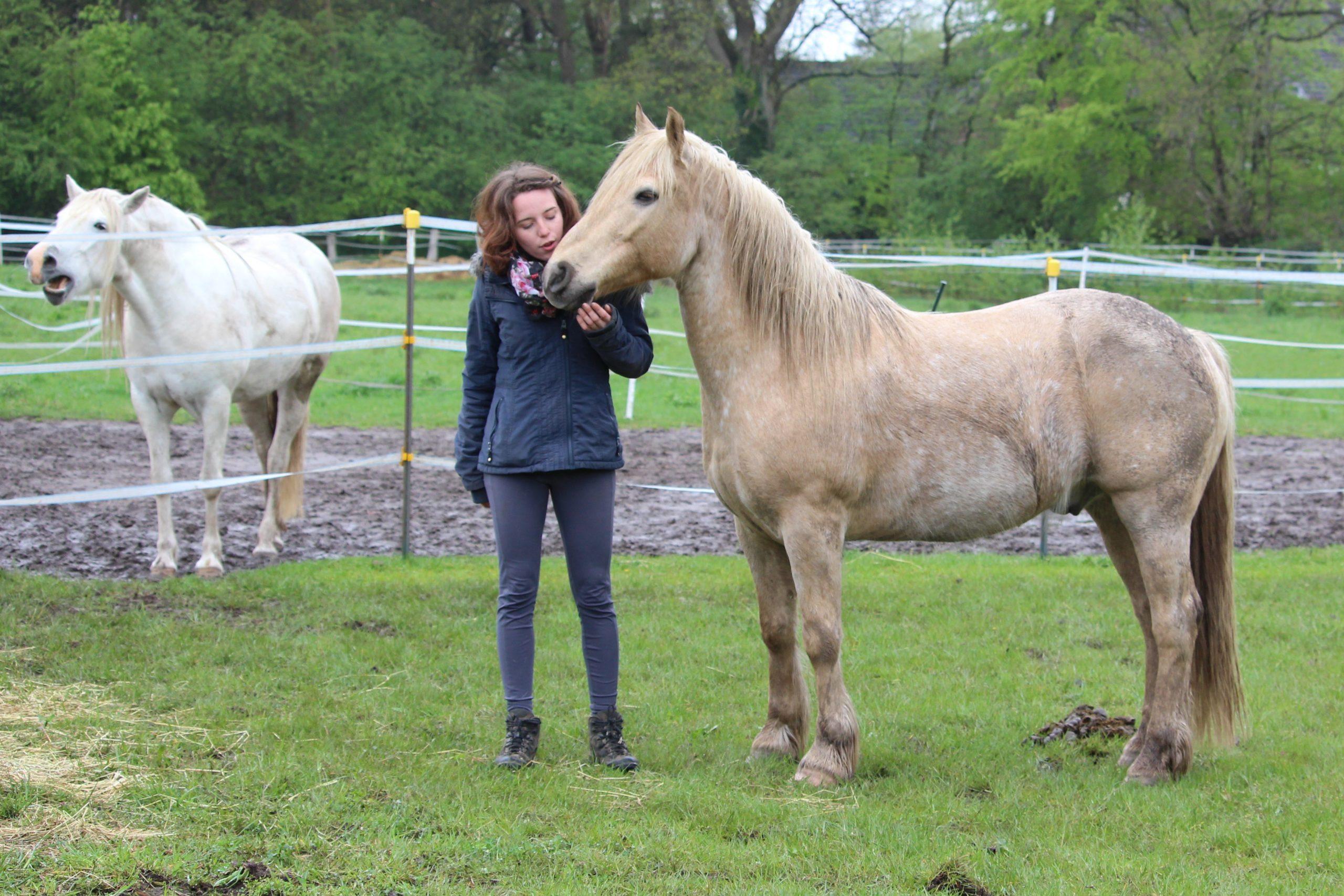 Junge Frau mit zwei Pferden auf der Koppel