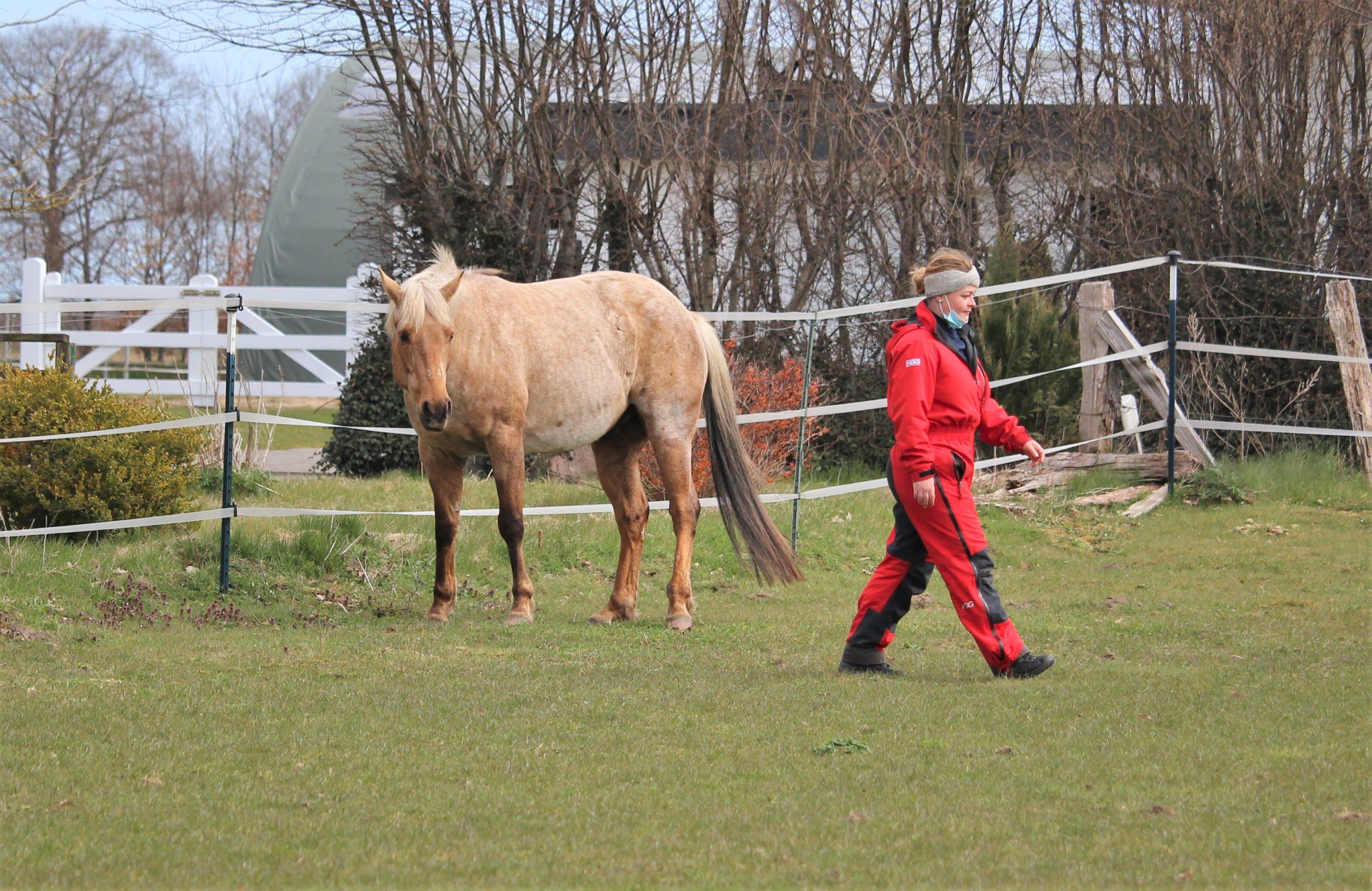 Pferd mit seiner Besitzerin auf der Wiese