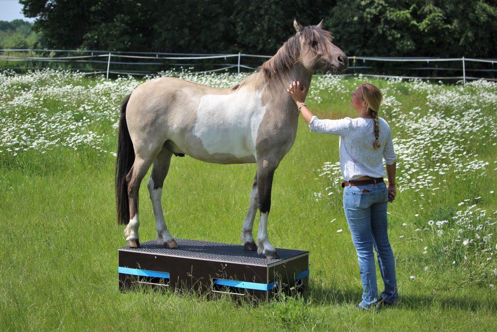tierkommunikation pferd