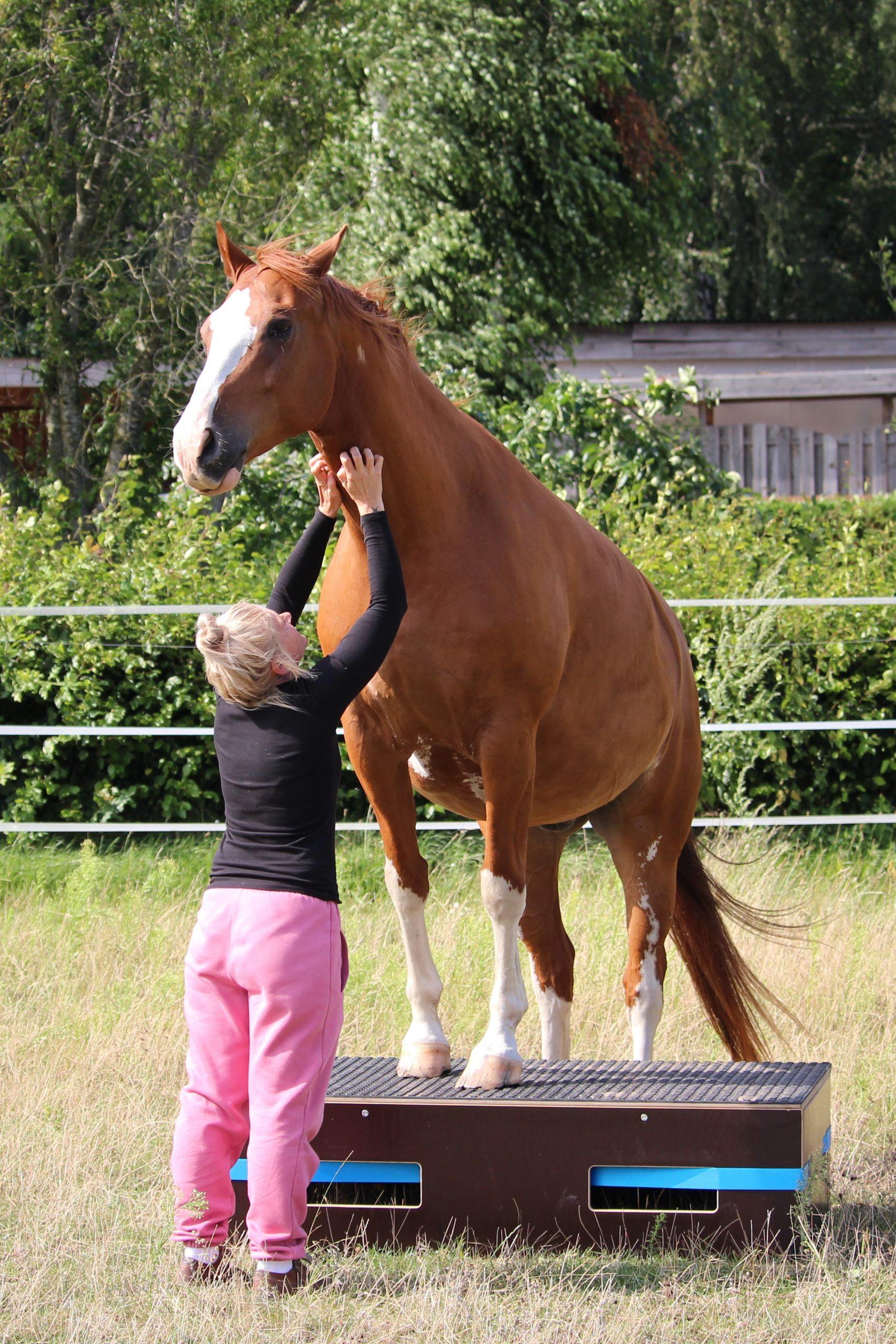 Pferdepodest