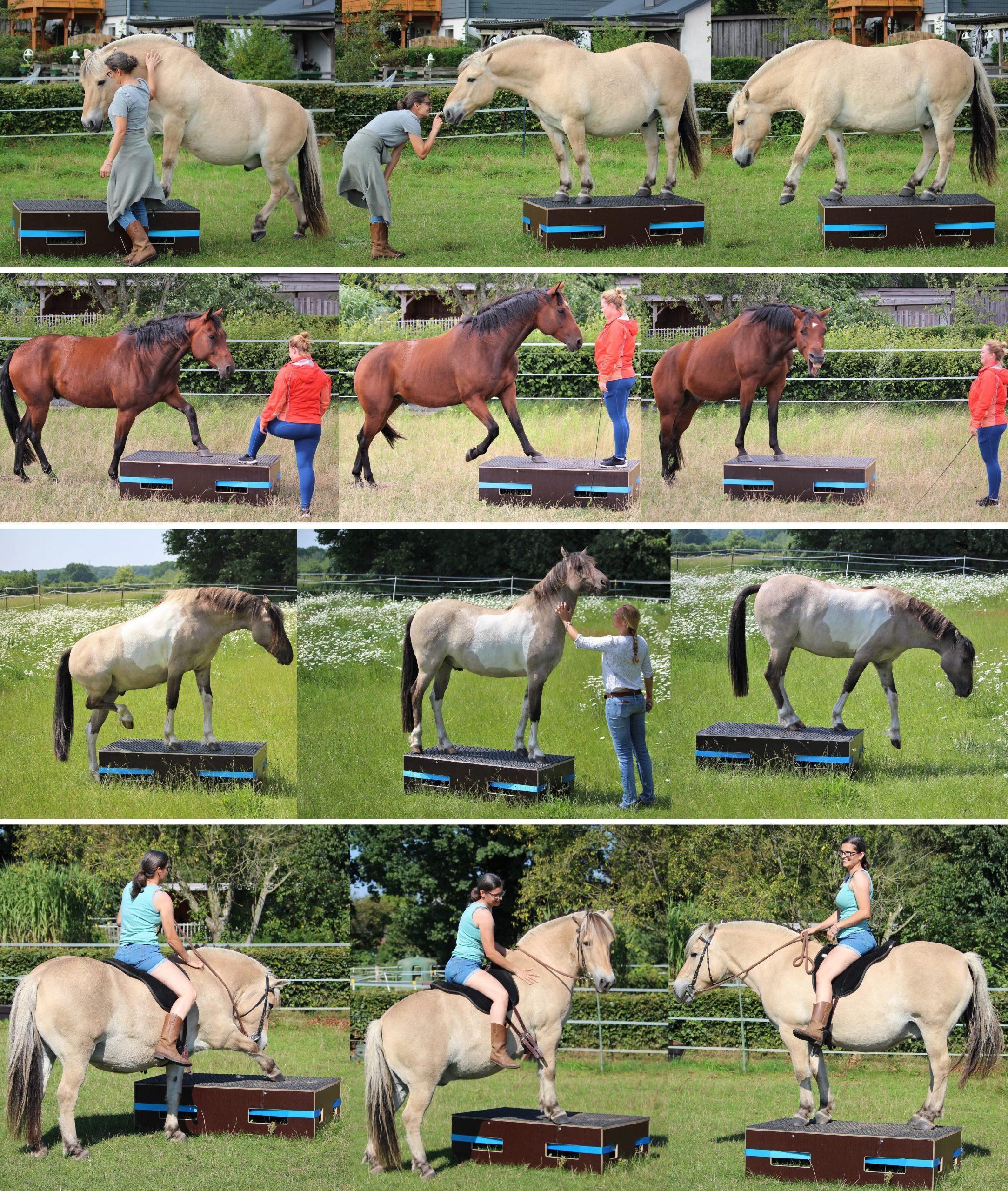 Podest für Pferde